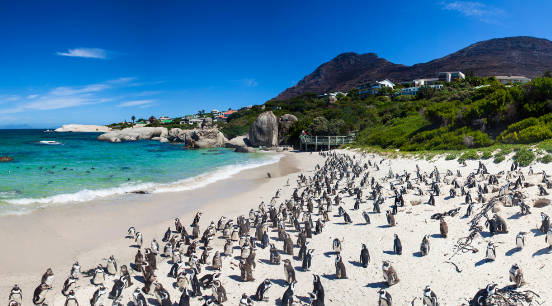 South Africa is now ready to welcome international travellers
